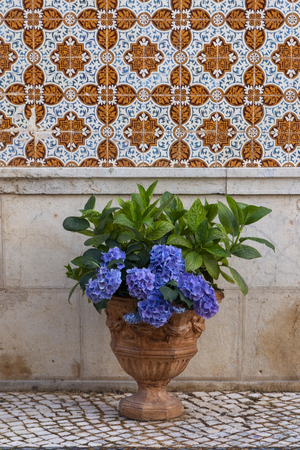 Beautiful view of a Hortensia flower vase and azulejo wall.