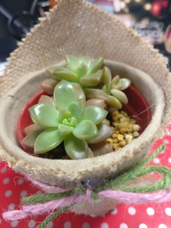 pot with a mixed variety of succulent plants. Banco de Imagens