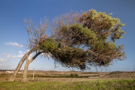 Crooked tree on Vila do Bispo caused by the strong winds usually happen on this region, Algarve, Portugal.