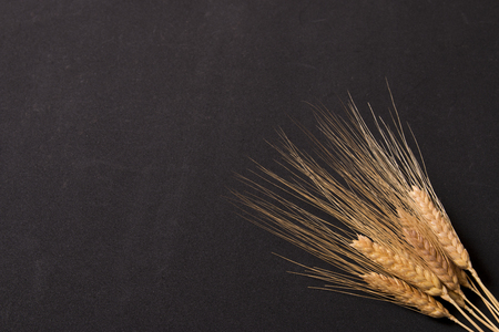 spike: wheat spike Stock Photo