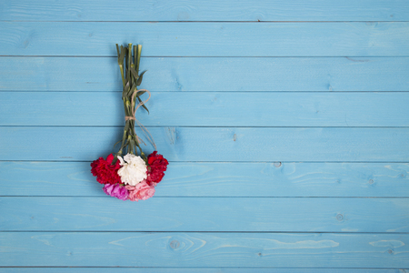 blue background: blue background and carnation