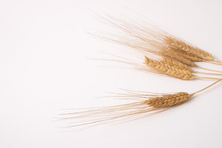 wheat spike on white Stock Photo