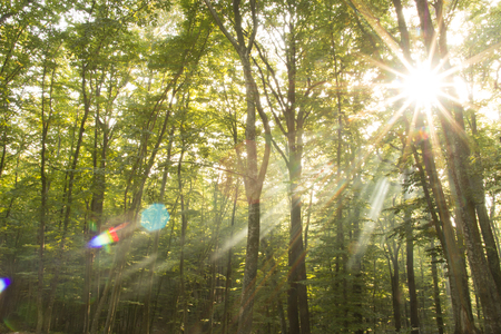 light  beam: light beam and forest Stock Photo