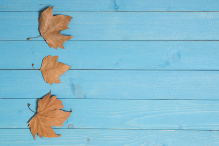 sycamore leaf: autumn background and dry leaves Stock Photo