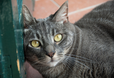 Close-up of gray tabby cat leaning on a green door
