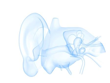clear ear photo