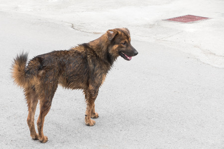 wire mess: Dirty domestic dog on the road. Stock Photo