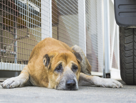 piteous: Homeless Lonely Abandoned Dog on the Street. Stock Photo