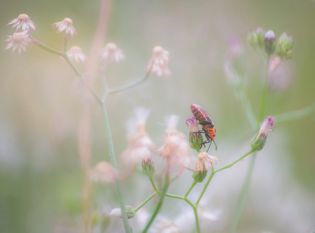 Wildflower: Macro view of wildflower and insect, selective and blur. Stock Photo