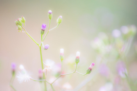 Wildflower: Macro view of wildflower, selective and blur. Stock Photo