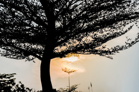 promised: Sunrise and tree in the morning, silhouette photography. Stock Photo