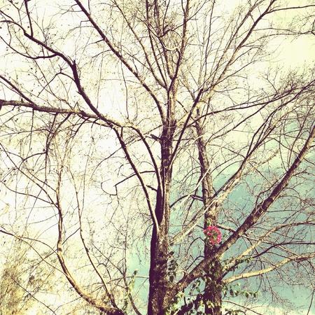 albero secco: Albero secco