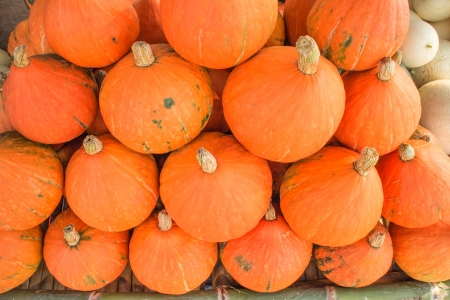 repackaged: Pumpkin small gold  Stock Photo