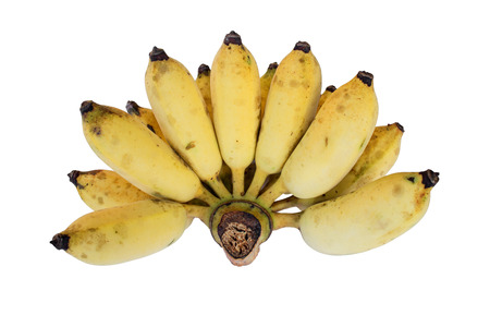 cultivated: Cultivated Banana