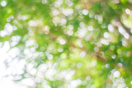 green bokeh blur background