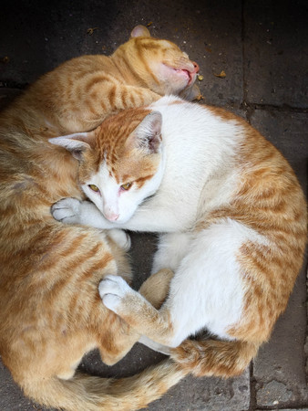 Two cats hugging sleeps on concrete