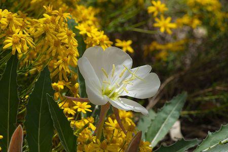 Wildflower Blooms