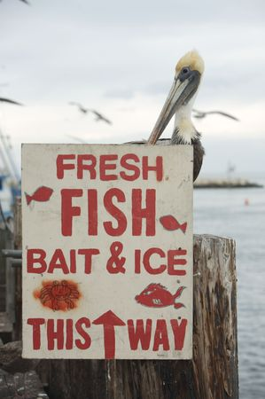 A pelican standing behind a sign advertizing fish