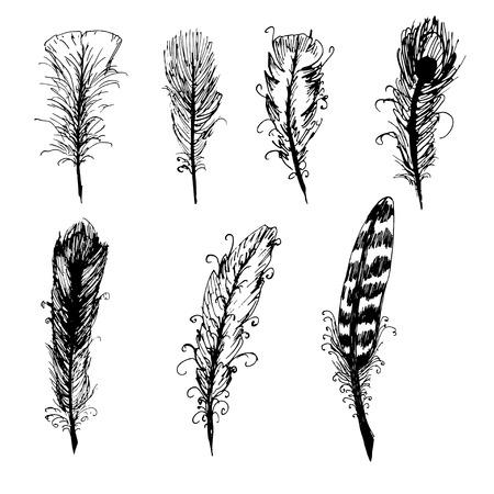 feather: Conjunto de la mano de la pluma de tinta dibujado. Elementos del vector. Vectores