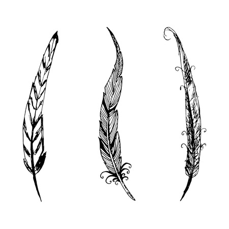 a literary sketch: Hand drawn ink feather set. Vector elements.