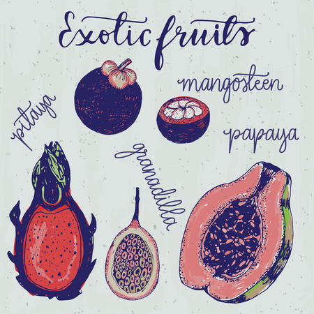 tropical garden: Set of hand drawn sketchy exotic fruits illustration in a vintage style.