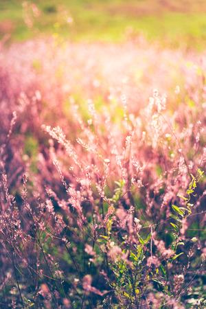 Wildflower: Wildflower field Stock Photo