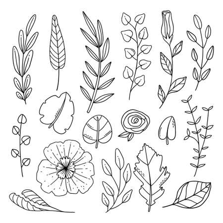 Hand drawn line art foliage and flower collection.