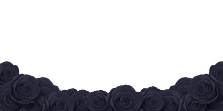 black roses flower with white background Фото со стока