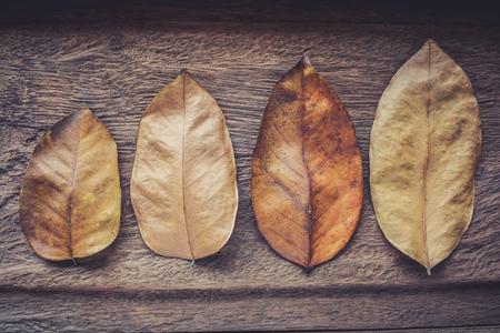 Dry leaf on wood Stock Photo