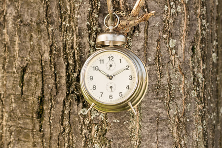 face in tree bark: Time is hanging. Old fashioned clock hanged against a tree. Stock Photo