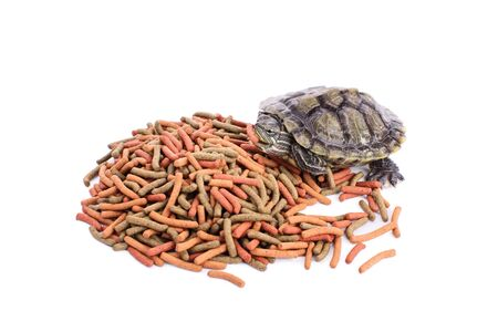 Small turtle on a pile of reptile food holding a chunk of it in its mouth, isolated on white background.