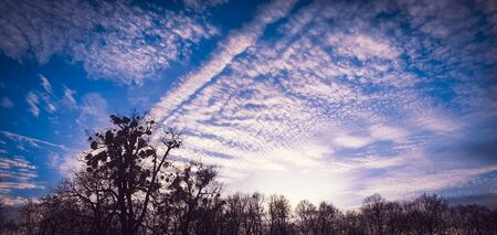 Beautiful altocumulus clouds with sunshine rays on a blue sky above the trees.  Blue sky background with white clouds.