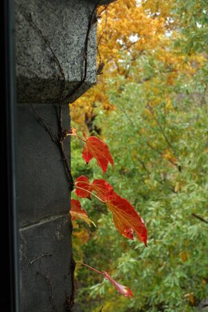 Red Leaves stand out in the beautiful Central Park in NYC