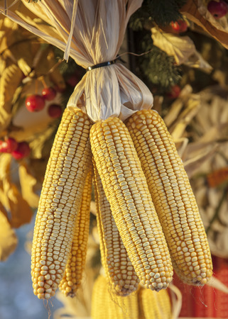 Decorative corn cobs