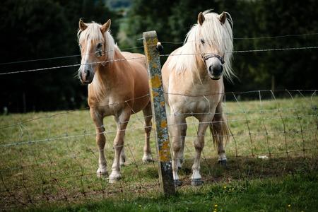 Dos caballos Foto de archivo - 86670305