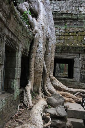 wat: Angkor Wat in Cambodia