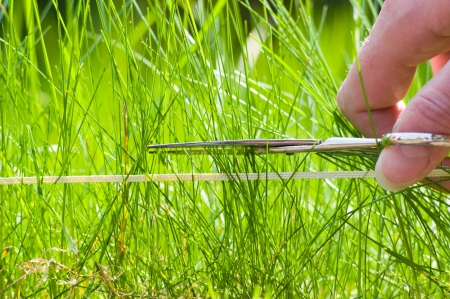The lawn is to be mowed with scissors and a string for your pleasure. Stock Photo - 4685498
