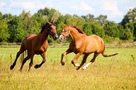Pferd Standard-Bild
