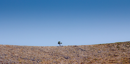 lone: Lone Tree on a mountain