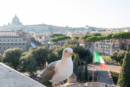 Seagull and Rome Italy cityscape