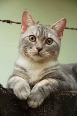 Cute cat sit at the old wall Stock Photo - 14760384
