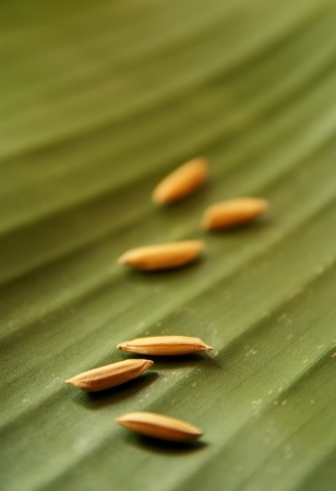 Golden grain arranged on a banana leaf. photo
