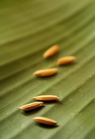 Golden grain arranged on a banana leaf. photo