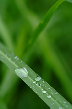Dew drop on the grass after raining