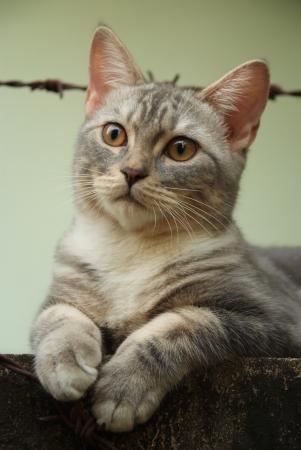 whiskar: Cute cat sit at the old wall