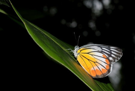 A beautiful butterfly is perched on a leaf with dark background Stock Photo