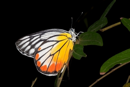 A beautiful butterfly is perched on a leaf with dark background Stock Photo - 17274097