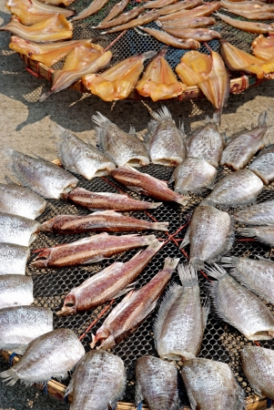 Fish dried in the sun on the net Stock Photo - 19354875