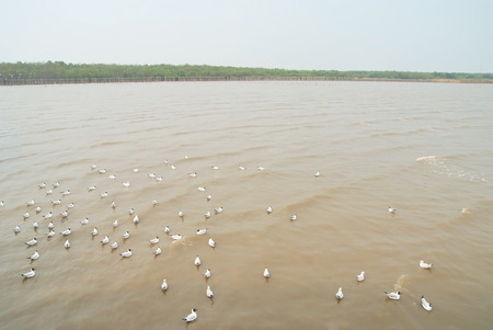 Many seagulls are swimming and foraging in the bay