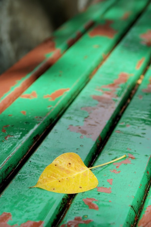 Dry leaf after the raining on old bench